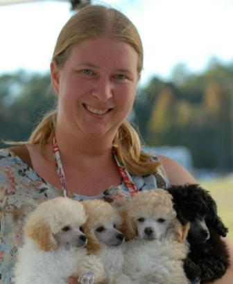 2011 Puppies, Photo by OZ Poodles